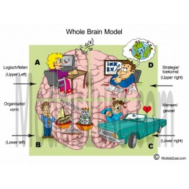Whole Brain Model - Cartoon